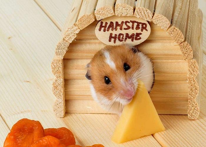 Chuyển nhà cho thú cưng hamster