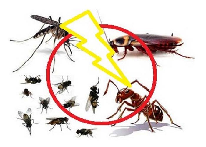 Cách diệt côn trùng hiệu quả tại nhà