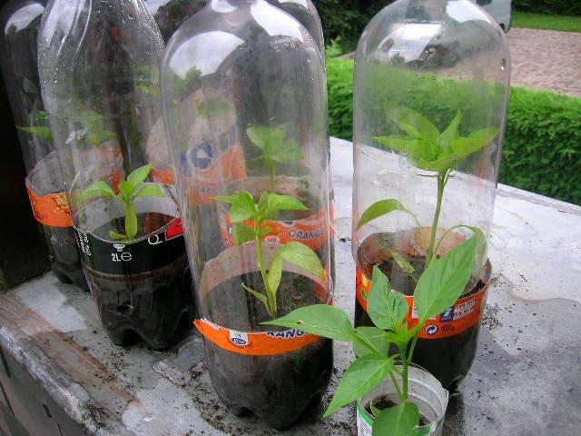 Tái chế chai nhựa thành nhà kính mini