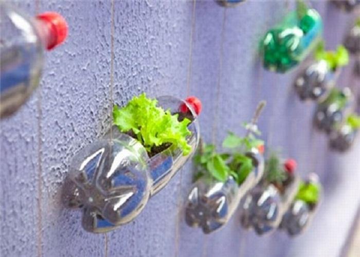 tái chế chai nhựa trồng cây