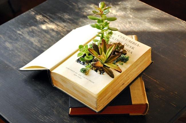 trồng cây trong sách