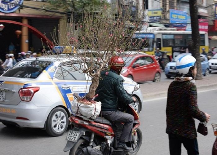 xe máy chở cây cảnh