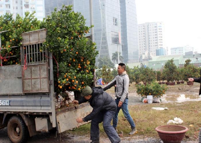 Xe tải chở cây cảnh